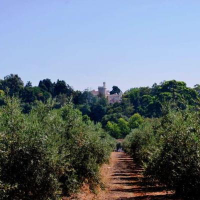Castel & Olive grove